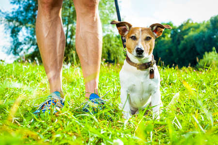 jack russell dog with owner and leather leash ready to go for a walk or walkies , outdoors outside at the park or river