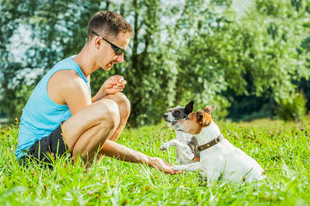 paw russell: jack russell dogs with owner with high five paws and training outside and outdoors at the park or meadow Stock Photo