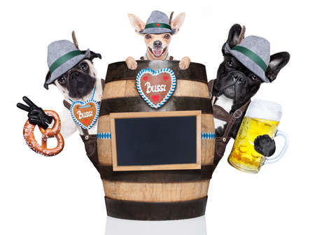 a placard: group or team of bavarian german dogs  with  gingerbread and hat, behind barrel,  isolated on white background , ready for the beer celebration festival in munich Stock Photo
