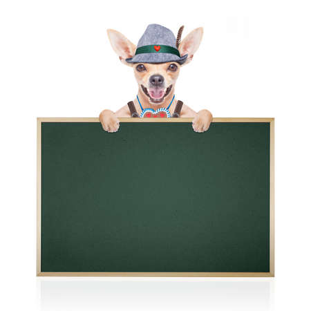 gingerbread: bavarian german chihuahua dog with  gingerbread and hat, with blackboard or placard banner ,  isolated on white background , ready for the beer celebration festival in munich