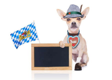 funny glasses: bavarian german chihuahua dog with  gingerbread and hat, with blackboard or placard banner ,  isolated on white background , ready for the beer celebration festival in munich