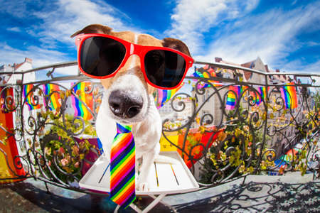 crazy funny gay dog proud of human rights ,sitting and waiting, with rainbow flag , isolated on white background Stock Photo