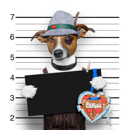 wiesn: bavarian german jack russell dog with  gingerbread and hat, mugshot at police station