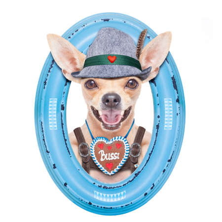 gingerbread: bavarian german chihuahua  dog with  gingerbread and hat,  isolated on white background , ready for the beer celebration festival in munich, inside a frame on the wall Stock Photo
