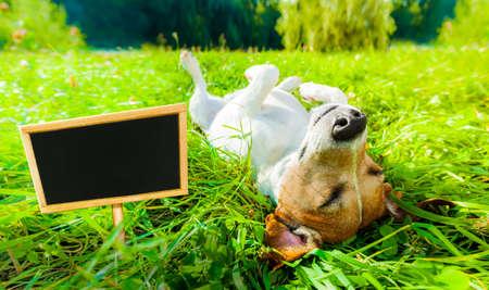 Jack-Russell-Hund entspannen und im Freien und außerhalb auf Sommerferien Urlaub mit Banner und Schild im Park auf Gras Wiese ruhen