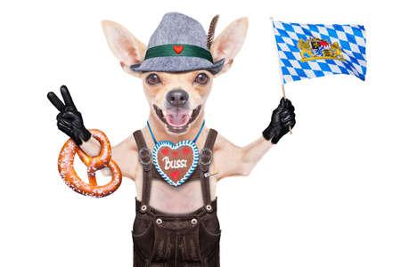 octoberfest: bávaro alemán perro chihuahua con el pan de jengibre y pretzel, aislados en fondo blanco, listo para la celebración del festival de la cerveza en Munich Foto de archivo