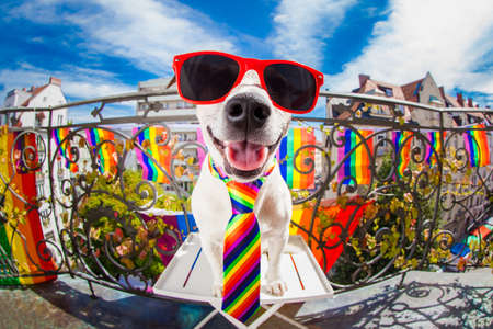 crazy funny gay dog proud of human rights ,sitting and waiting, with rainbow flag , isolated on white background Banque d'images