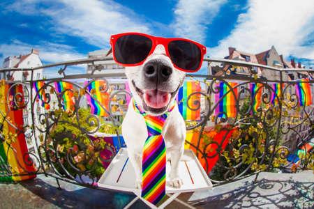 gekke grappige vrolijke hond trots van de mensenrechten, zitten en wachten, met regenboog vlag, geïsoleerd op een witte achtergrond