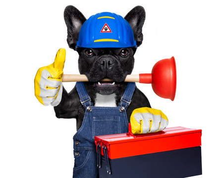 bath: handyman  french bulldog dog worker with helmet and tool box  in paws, ready to repair, fix everything at home, isolated on white background, thumb up
