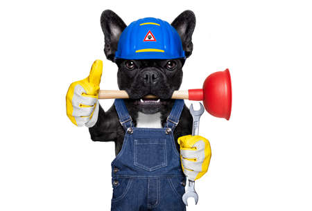 handyman  french bulldog dog worker with helmet and plunger  in mouth, ready to repair, fix everything at home, isolated on white background ,