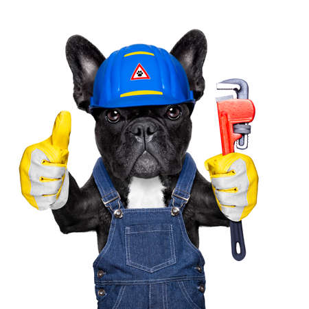 bath: handyman  french bulldog dog worker with helmet and plumber wrench  in paws, ready to repair, fix everything at home, isolated on white background, thumb up Stock Photo
