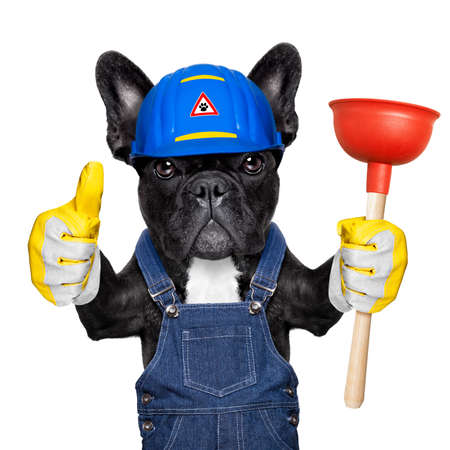 bath: handyman  french bulldog dog worker with helmet and plunger  in hand, ready to repair, fix everything at home, isolated on white background , thumb up