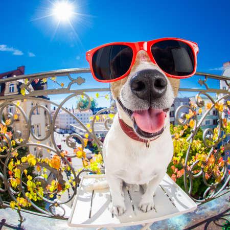 sacar la lengua: Jack Russell tonto loco retrato del perro mudo en cierre para arriba lente ojo de pez mira en el balcón de vacaciones vacaciones de verano, sacar la lengua