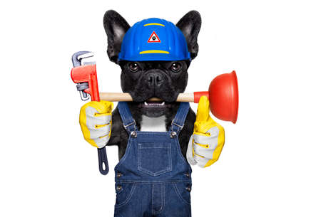 handyman  french bulldog dog worker with helmet and plunger  in mouth, ready to repair, fix everything at home, isolated on white background ,thumb up Stock fotó