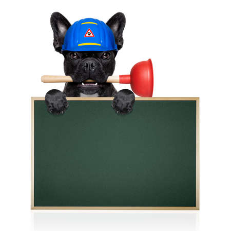 bath: handyman  french bulldog dog worker with helmet and plunger  in mouth, ready to repair, fix everything at home, isolated on white background ,behind  banner placard Stock Photo