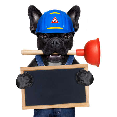 profession: handyman  french bulldog dog worker with helmet and plunger  in mouth, ready to repair, fix everything at home, isolated on white background, holding   banner placard Stock Photo
