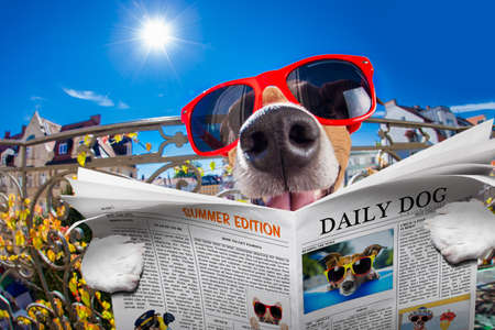 animal idiot: silly dumb crazy jack russell dog portrait in close up fisheye lens look on balcony on summer vacation holidays, reading magazine or newspaper