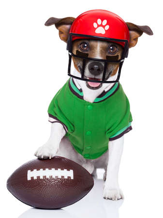 sporty rugby dog with a big sport ball , isolated on white background wearing american football helmet