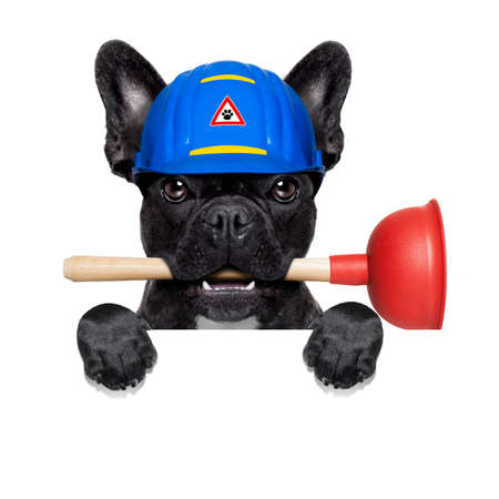 handyman  french bulldog dog worker with helmet and plunger  in mouth, ready to repair, fix everything at home, isolated on white background ,behind  banner placard Stock Photo