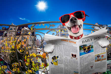 animal idiot: silly dumb crazy jack russell dog portrait in close up fisheye lens look on balcony on summer vacation holidays, sticking out tongue, reading magazine or newspaper