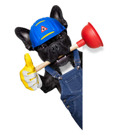 handyman  french bulldog dog worker with helmet and plunger  in mouth, ready to repair, fix everything at home, isolated on white background , thumb up,  beside banner placard