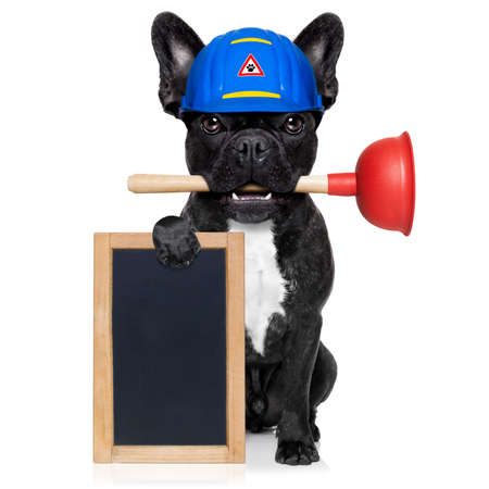 handyman  french bulldog dog worker with helmet and plunger  in mouth, ready to repair, fix everything at home, isolated on white background, holding   banner placard Stock fotó