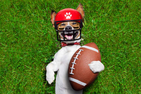 soccer jack russell dog holding a rugby ball and laughing out loud with red sunglasses outdoors on meadow grass at the field