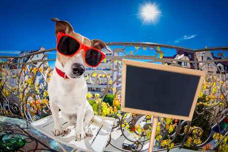 sunbath: silly dumb crazy jack russell dog portrait in close up fisheye lens look on balcony on summer vacation holidays, placard banner blackboard on the side Stock Photo