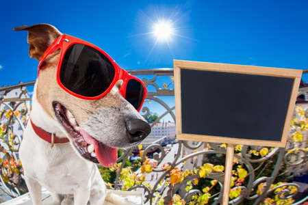 silly dumb crazy jack russell dog portrait in close up fisheye lens look on balcony on summer vacation holidays, sticking out tongue, placard banner blackboard on the side Stock Photo
