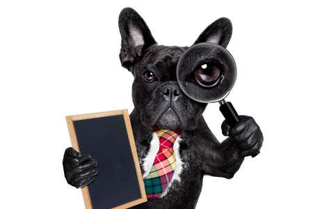 法國鬥牛犬搜索和發現與放大鏡,在白色背景孤立特務,拿著旗幟標語牌黑板