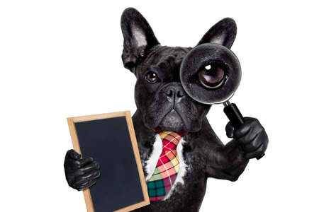 observation: french bulldog  dog searching and finding as a spy with magnifying glass , isolated on white background, holding banner placard blackboard