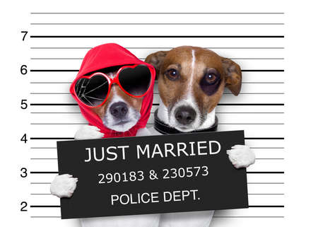mugshot: couple of newlywed just married  of dogs in a mugshot as criminals posing together forever in jail