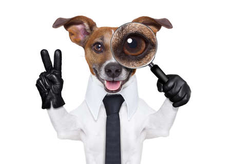 russell: jack russell dog searching and finding as a spy with magnifying glass , isolated on white background