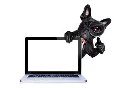 法國鬥牛犬搜索和發現與放大鏡,在白色背景孤立的間諜,背後PC電腦筆記本屏幕的平板電腦,在白色背景孤立