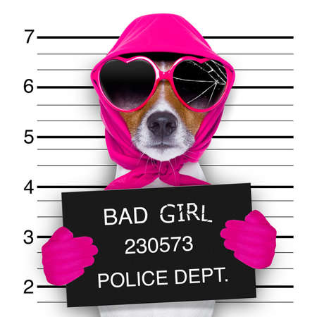 jail: diva lady girl  dog posing for a lovely mugshot, as a criminal and thief with broken sunglasses and scarf Stock Photo