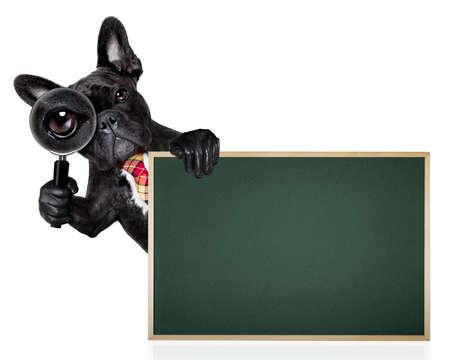 フレンチ ブルドッグ犬検索およびバナー プラカード黒板の後ろの白い背景で隔離の虫眼鏡のスパイとして 写真素材