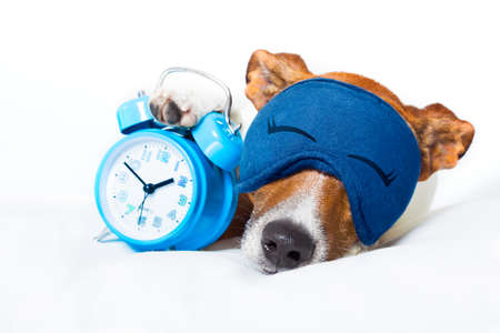 comfortable: dog  resting ,sleeping or having a siesta  with alarm  clock and eye mask,  holding a clock , isolated on white background Stock Photo