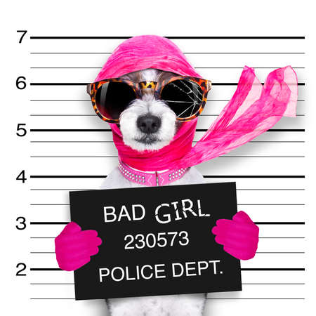 diva lady girl  dog posing for a lovely mugshot, as a criminal and thief with broken sunglasses and scarf Stock Photo