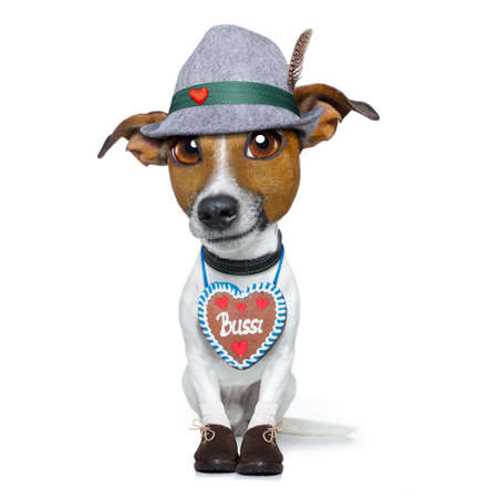 bavarian german jack russell dog with  gingerbread and hat, isolated on white background , ready for the beer celebration festival in munich