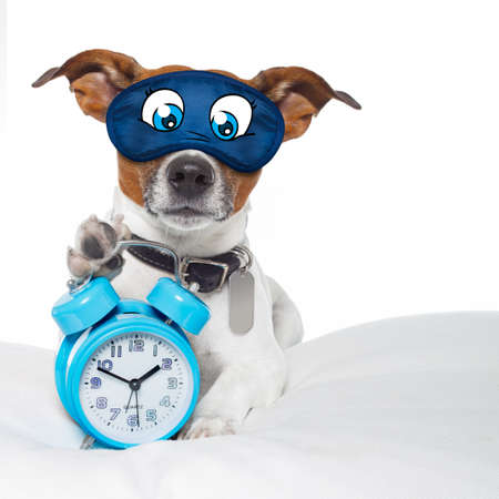 resting mask: dog  resting ,sleeping or having a siesta  with alarm  clock and eye mask,  holding a clock , isolated on white background Stock Photo