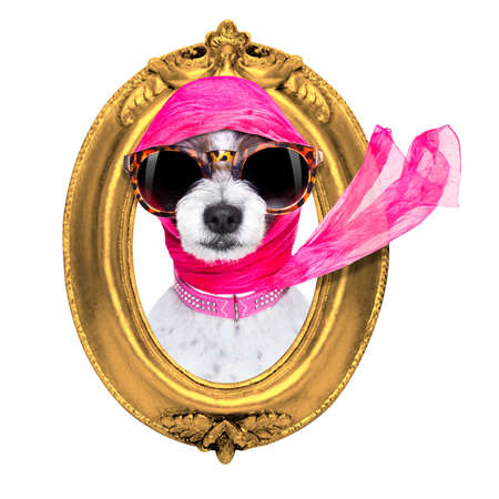painter artist frame  dogchic fashionable diva luxury  cool dog with funny sunglasses, scarf and necklace, inside banner , blackboard or frame