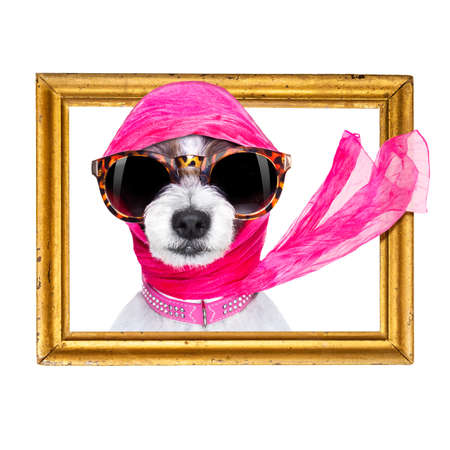 chic fashionable diva luxury  cool dog with funny sunglasses, scarf and necklace, inside banner , blackboard or frame