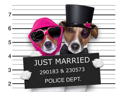 couple of newlywed just married  of dogs in a mugshot as criminals posing together forever in jail