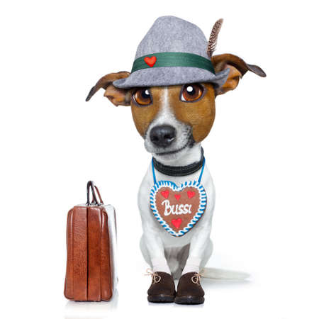 silly face: bavarian german jack russell dog with  gingerbread and hat, isolated on white background , ready for travel on vacation holidays with bag and luggage Stock Photo