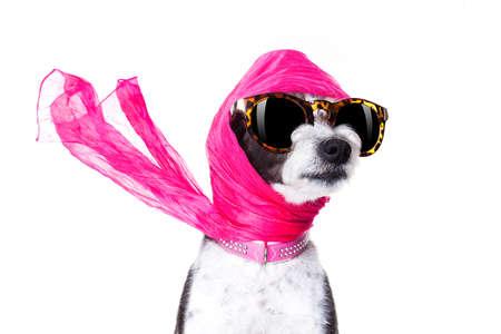 chic freddo cane alla moda diva di lusso con occhiali da sole divertenti, sciarpa e collana, isolato su sfondo bianco