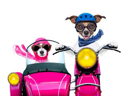 paar net getrouwd jack russell honden het besturen van een grappige motor vespa voor vakantie vakantie en huwelijksreis, op een witte achtergrond Stockfoto