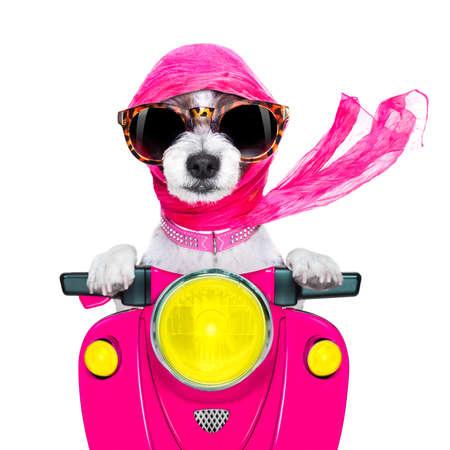 オートバイの歌姫レディ空想犬白い背景で隔離のサングラスをかけたバイクを運転