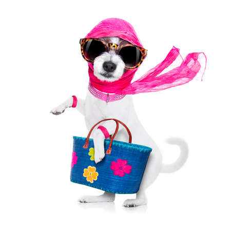 crazy and silly terrier dog diva lady with shopping bag, isolated on white background Stock Photo