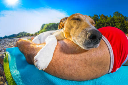 jack russell dog and owner sunbathing a having a siesta under a palm tree , on summer vacation holidays at the beach