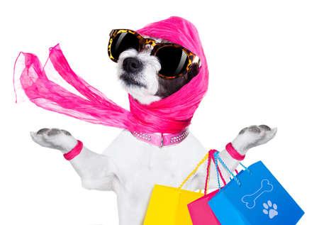 Señora diva terrier perro loco y tonto con la bolsa de la compra, aislados en fondo blanco Foto de archivo - 62512494